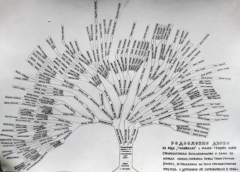 """Родословно дърво на рода """"Ганювалар"""", с. Малко Тръново, Чирпанско"""